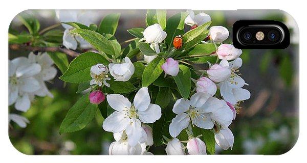 Ladybug On Cherry Blossoms IPhone Case