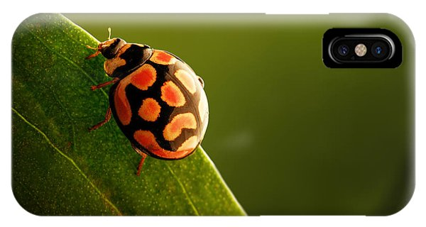 Insect iPhone Case - Ladybug  On Green Leaf by Johan Swanepoel