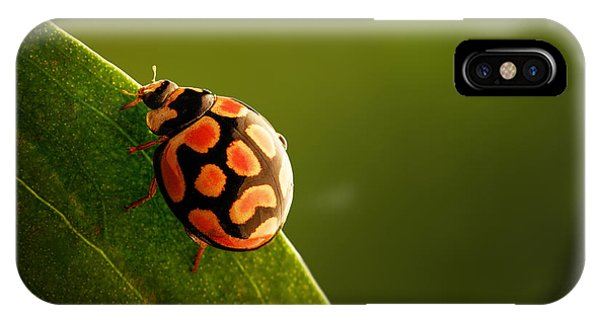 Insects iPhone Case - Ladybug  On Green Leaf by Johan Swanepoel