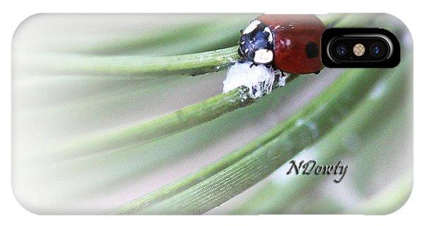 Ladybug On Pine IPhone Case