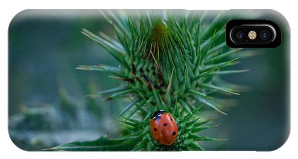 Ladybug On Thistle IPhone Case