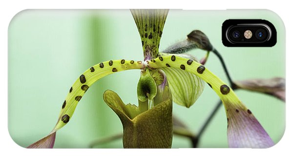 IPhone Case featuring the photograph Lady's Slipper Orchid by Cristina Stefan