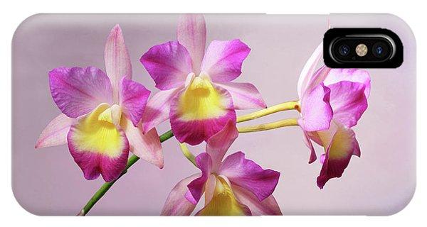 Laeliocatonia Hybrid Orchids V2 IPhone Case