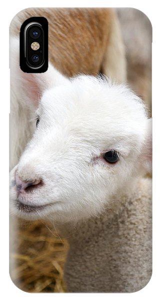 Lamb IPhone Case