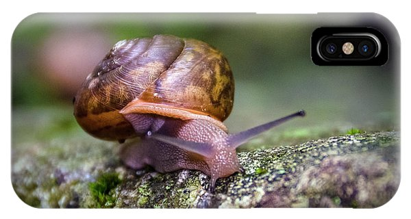 Land Snail II IPhone Case