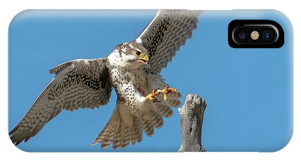 Landing Prairie Falcon IPhone Case