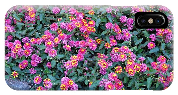 Lantana IPhone Case