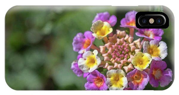 Lantana In Bloom IPhone Case