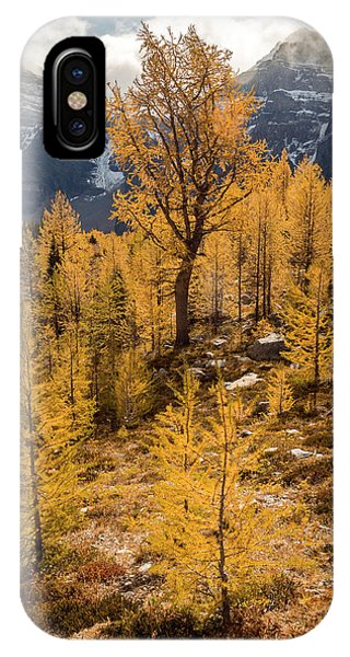 Larch Family IPhone Case