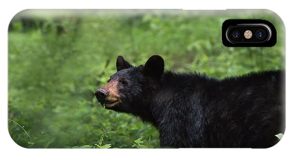 IPhone Case featuring the photograph Large Black Bear by Andrea Silies
