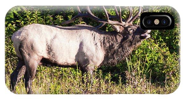 Large Bull Elk Bugling IPhone Case