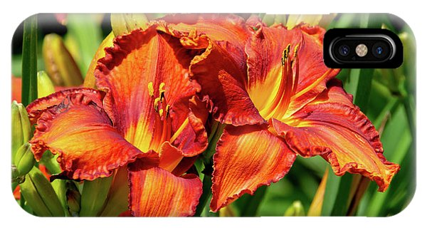 Large Deep Orange Tiger Lilys IPhone Case