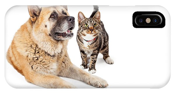 Large Dog And Cat Looking Up Together IPhone Case