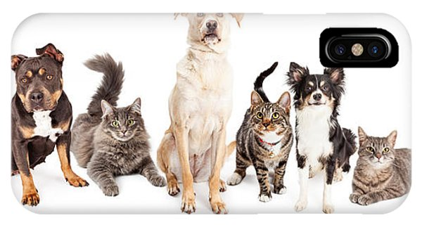Cutout iPhone Case - Large Group Of Cats And Dogs Together by Susan Schmitz