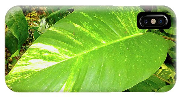 IPhone Case featuring the photograph Large Leaf by Francesca Mackenney