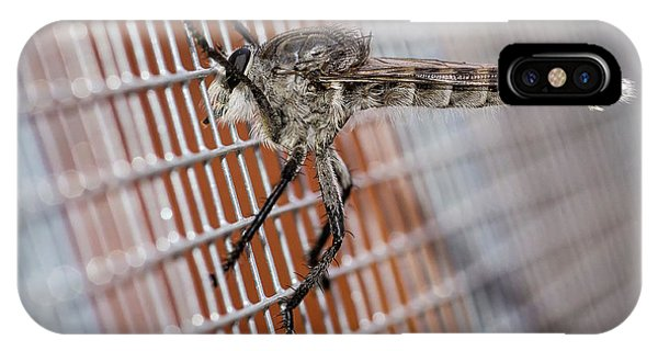 IPhone Case featuring the photograph Large Robber Fly  by John Brink