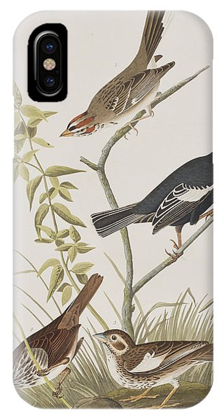 Lark Finch Prairie Finch Brown Song Sparrow IPhone Case