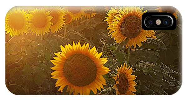 Late Afternoon Golden Glow IPhone Case