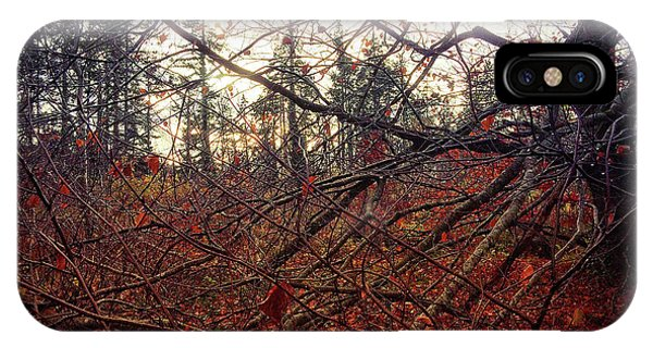 Late Autumn Morning IPhone Case