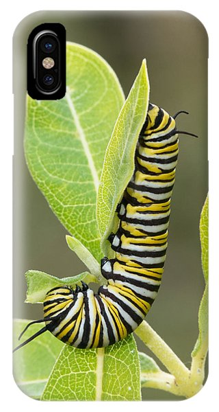 Late Season Monarch IPhone Case