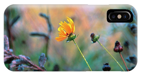Fall Flowers iPhone Case - Late Summer Rain From The Forest Floor by Bob Orsillo
