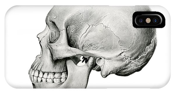 Bone iPhone Case - Lateral View Of Human Skull by German School