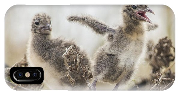 Laughing Jesus iPhone Case - Laughing Gull Chicks by Paula Porterfield-Izzo