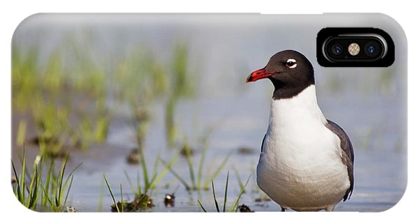 Laughing Gull On Taylors Creek IPhone Case
