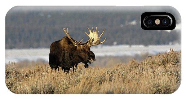 Laughing Moose IPhone Case