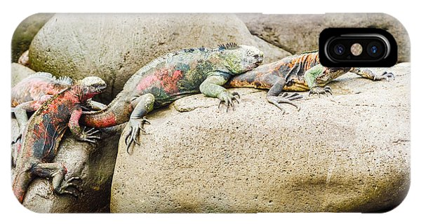 Lava Lizard On Galapagos Islands IPhone Case