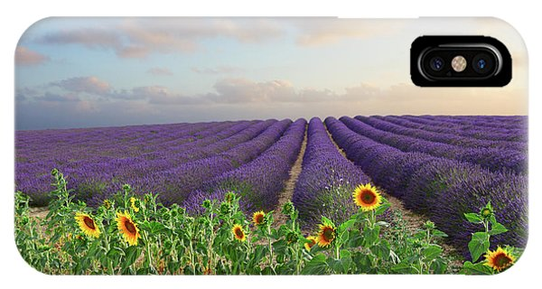 Lavender And Sunflower Flowers Field IPhone Case