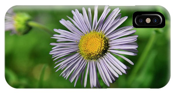 Lavender Serenity IPhone Case
