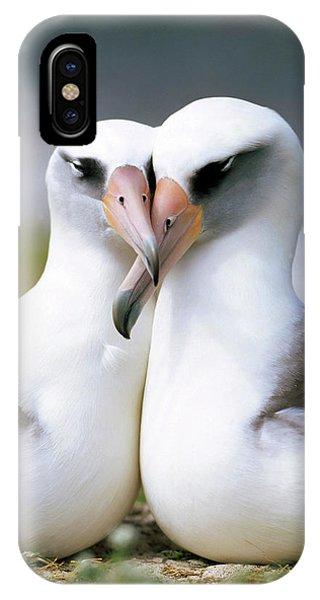 Mp iPhone Case - Laysan Albatross Phoebastria by Tui De Roy