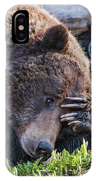 Lazy Bear IPhone Case