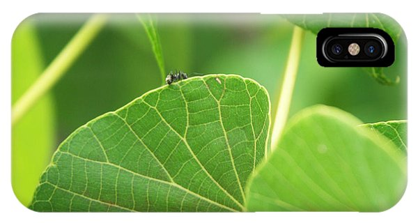 Ant iPhone Case - Leaf And Ant by Kathleen Wong