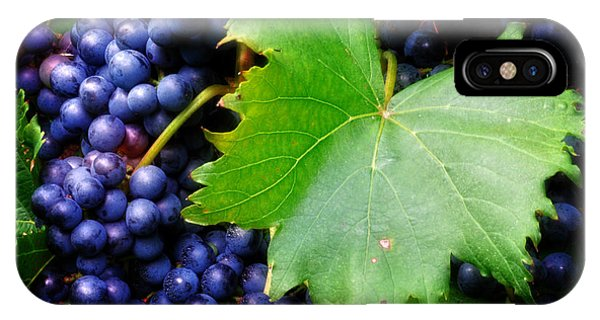 Leaf And Grapes IPhone Case