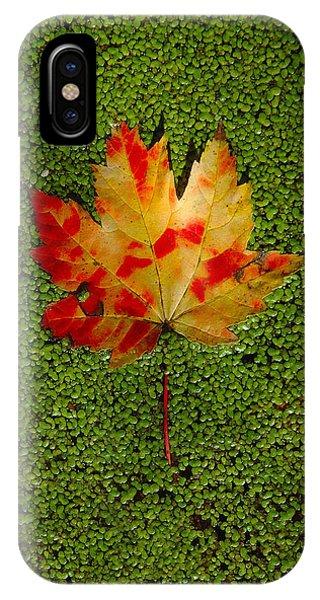 Leaf Floating On Duckweed IPhone Case