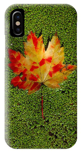 Leaf Floating On Duckweed IPhone Case