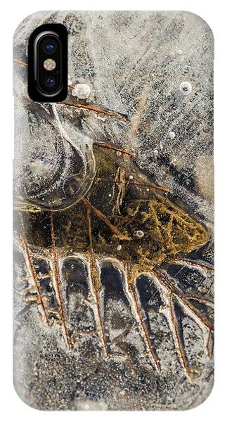 Leaf Veins In Ice IPhone Case