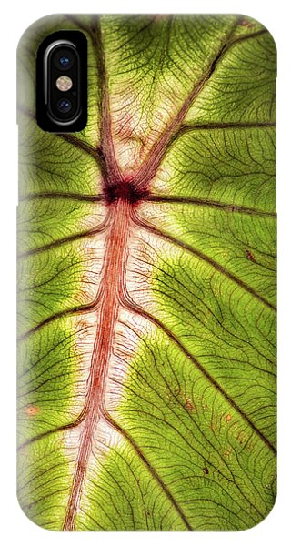 Leaf With Veins IPhone Case