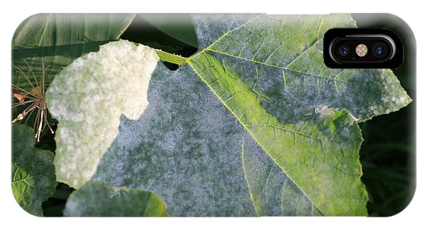 Calming Leafy Glade IPhone Case
