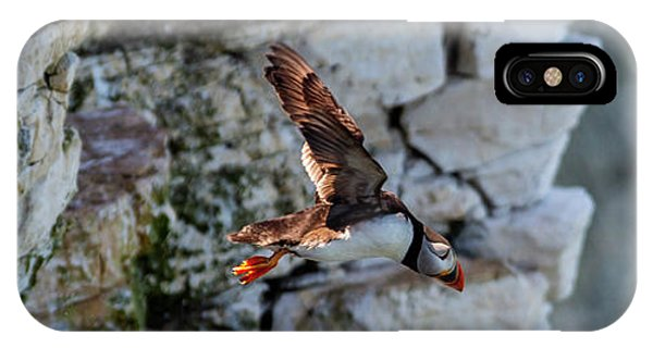 IPhone Case featuring the photograph Leap Puffin  by Cliff Norton