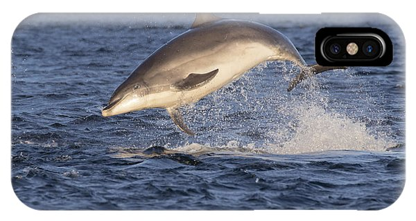 Jolly Jumper - Bottlenose Dolphin #40 IPhone Case