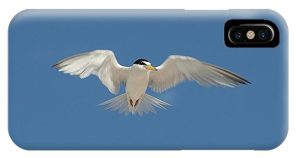 Least Tern 2 IPhone Case