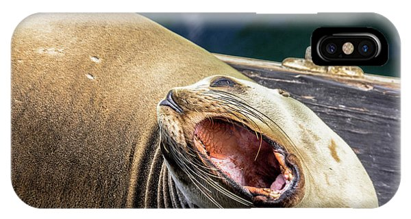 California Sea Lion Yawn IPhone Case