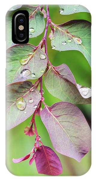 Leaves And Raindrops IPhone Case