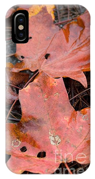 Leaves-old Leaves IPhone Case