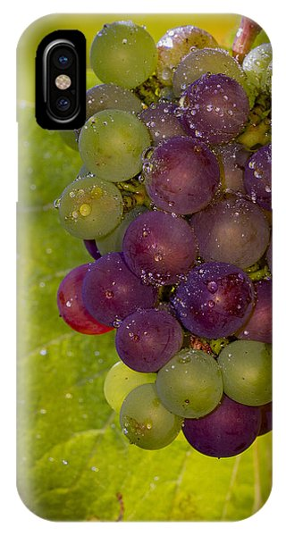 Leftover Pinot Cluster IPhone Case