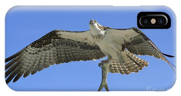 Ospreys iPhone Case - Leftovers by Quinn Sedam