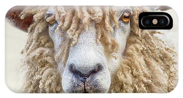 Leicester Longwool Sheep IPhone Case